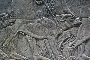 Ashurbanipal mastiff (British Museum)