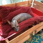 carneybarnacle 78