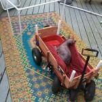 carneybarnacle 81