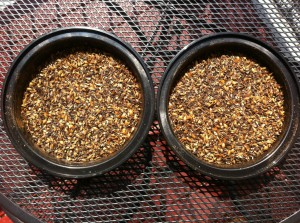 Home Milled vs Store Milled Dark Crystal Malt