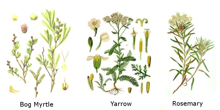 Gruit - Bog Myrtle, Yarro, and Rosemary