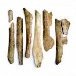 Oracle 'Dragon' Bones (AIC)
